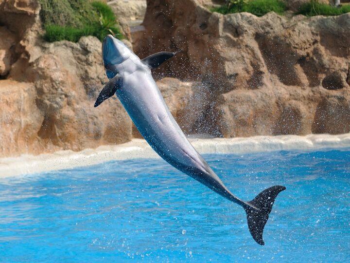 kolmården delfiner 2015